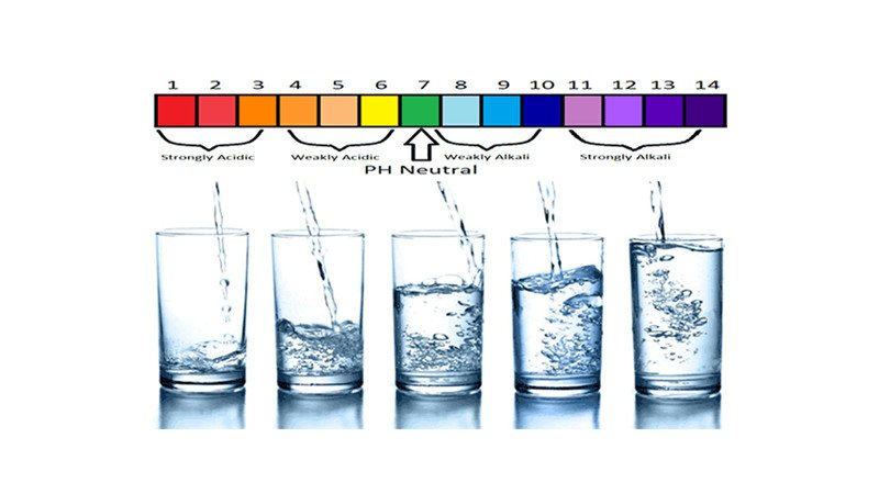 Alkaline vs. Distilled Water